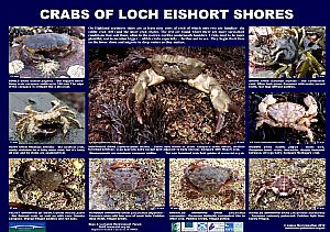 SPECIAL CRABS POSTER FOR NORTH SLEAT (on Skye)