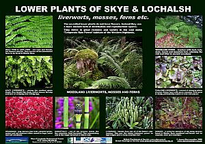 Lower (flowerless) Plants
