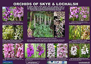 Orchids - full size available below